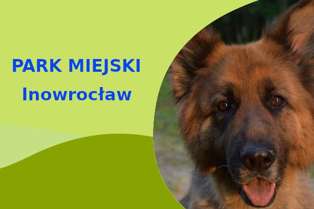 Owczarek Niemiecki w Nowym Parku Solankowym Inowrocław