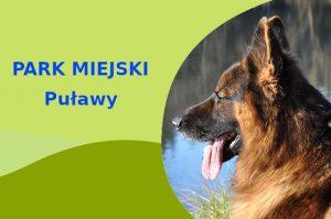 Owczarek Niemiecki w Parku Czartoryskich Puławy