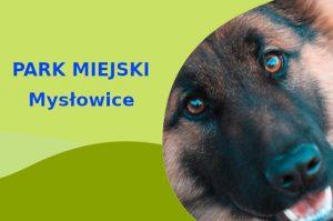 Owczarek Niemiecki w Parku Górka Słupecka Mysłowice