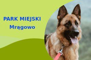 Owczarek Niemiecki w Parku im. Gen. Władysława Sikorskiego Mrągowo