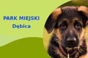 Owczarek Niemiecki w Parku Imienia Włodzimierza Skarbka-Borowskiego Dębica