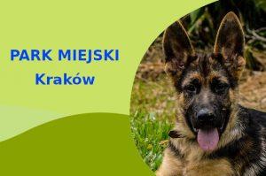 Owczarek Niemiecki w Parku Lotników Polskich Kraków