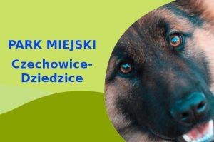 Owczarek Niemiecki w Parku Miejskim Lasek Czechowice-Dziedzice
