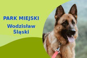 Owczarek Niemiecki w Parku Miejskim Wodzisław Śląski