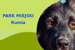 Owczarek Niemiecki w Parku Starowiejskim Rumia