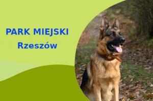 Owczarek Niemiecki w Parku Sybiraków Rzeszów