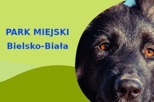 Owczarek Niemiecki w Parku Włókniarzy Bielsko-Biała