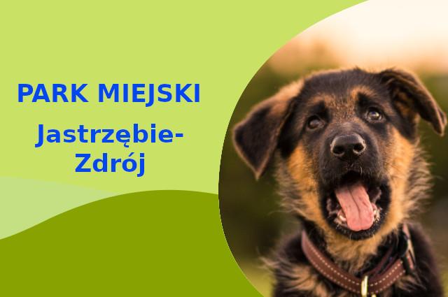 Owczarek Niemiecki w Parku Zdrojowym Jastrzębie-Zdrój