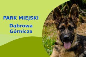 Owczarek Niemiecki w Parku Zielona Dąbrowa Górnicza